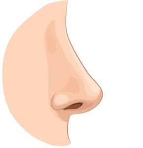 Gin Tasting Nosing